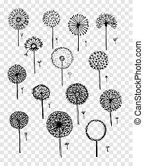 Dandelions collection, sketch fro your design. Vector...