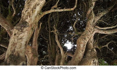 Thick Branches Blocking Passage Way - Close up dolly shot of...