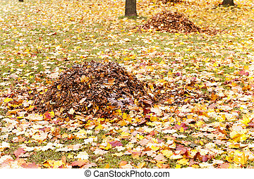 foliage of trees - the autumn foliage which fell from trees...