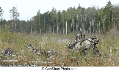 forestry wood monster in Russia in the spring forest glade