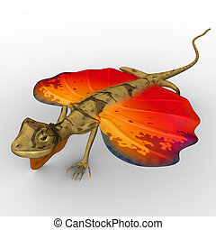 Flying Lizard - Draco dussumieri, commonly known as the...