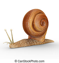 Helix (Snail) - Helix is a genus of large air-breathing land...