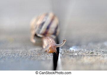 Garden snail - Picture of a Garden snail
