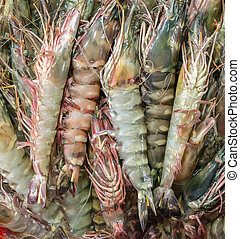 shrimp background - prawn or shrimp background seafood...