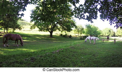 Brown horse on meadow - In meadow on banks of Dnieper River...