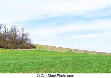 Field with young crops, landscape agricultural background