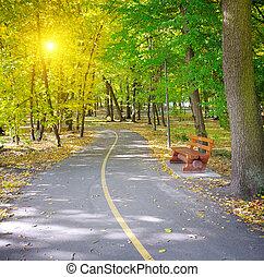 Rays of sun in autumn park