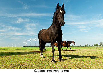 picture of young Hanoverian horse standing in grass