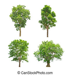 Green trees collection isolated