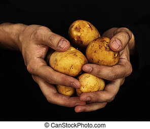 potatoes in male hands