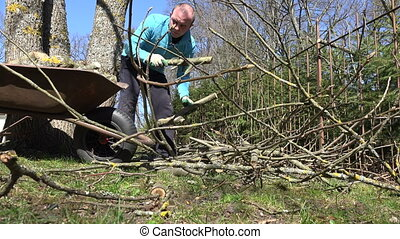 gardener man wood barrow - Gardener man load wood to barrow...