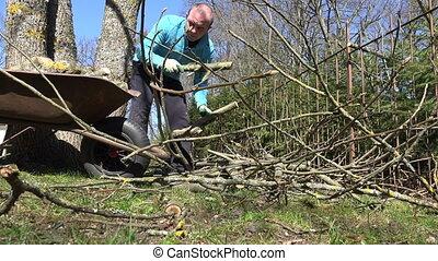 gardener man wood barrow - Gardener man load wood to barrow...