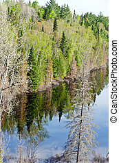Forest lake in sunny day in Quebec
