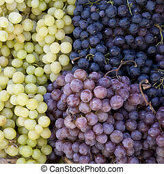 Grapes on a market in Siena, Tuscany, Italy, Europe