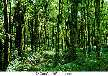 Rainforest - Trunks of trees with moss on brazilian atlantic...