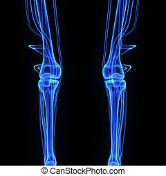 Knee joints - The knee joint is one of the strongest and...