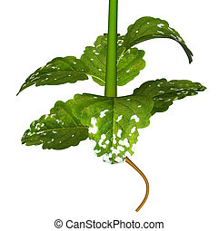 Mustard plants are any of several plant species in the...