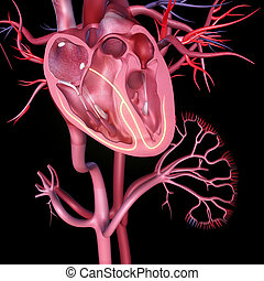 Heart intersection - Heart intersection is a collection of...