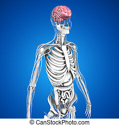 Human Brain - The human brain has many properties that are...