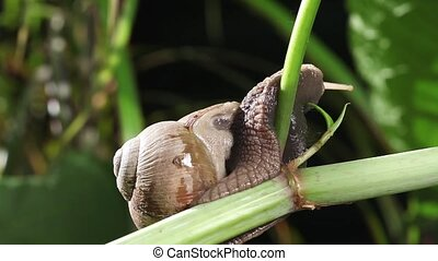 Forest snail on a big branch opening eyes and exploring...