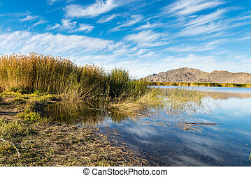 Reeds and lake in the autumn