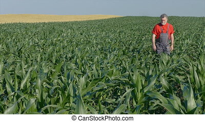 Agriculture, farmer in corn field - Agriculture, farmer...