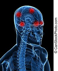 headache/migraine - 3d rendered x-ray illustration of human...