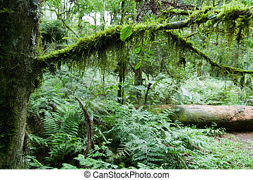 Rainforest - Moss on the tree twig in forest with trunk in...