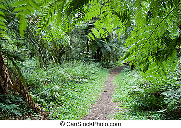 Track in the Forest - Track in the atlantic rainforest,...