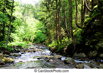 Mounting stream - Beautiful mounting stream in the summer...
