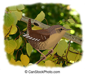Winter Wren with leaves - Troglodytes troglodytes