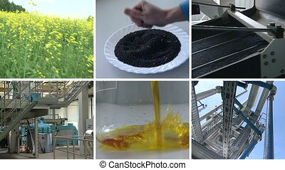 biodiesel process collage