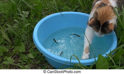 cat hunt fish in bowl - close up of cute cat hunt of small...