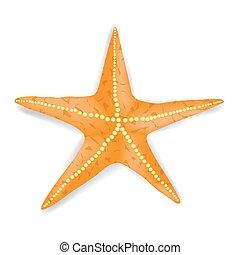 Starfish - Single Realistic Starfish Isolated on White...