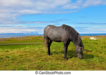 The gray horse - Farmer sleek gray horse Beautiful horse...