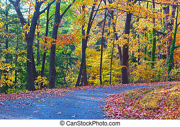Colorful deciduous trees in autumn - A walkway along...