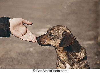 Child hand and lonely homeless dog - Helping child hand and...