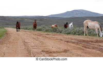 Wild Horses Wyoming - Beautiful Wild Horses - Wyoming...
