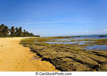 Bahia - Praia do Forte - Bahia - Northeast of Brazil .