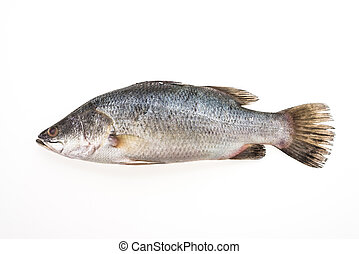 Sea bass fish - Fresh Sea bass fish isolated on white...