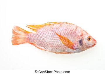 cru, fresco, peixe,