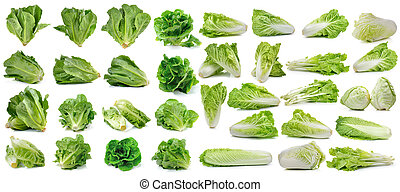 cos fresh chinese cabbage and lettuce on white background