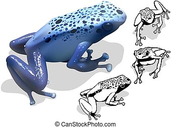 Blue Poison Dart Frog Dendrobates azureus - Set of...