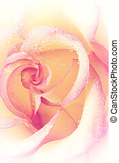 Rose with water drops on petals, light toning, the vertical...