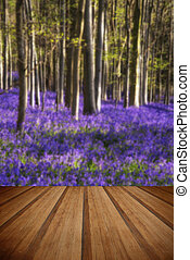 Stunning bluebell flowers in Spring forest landscape with...