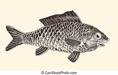 Fish Bream Vintage Engraved Vector Illustration - Fish Bream...
