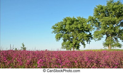 Pink flowers and trees in the meadow - Pink flowers and...