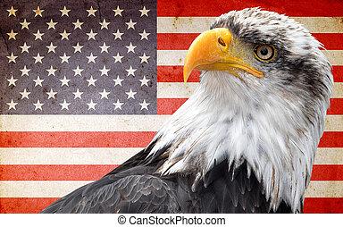 norte, norteamericano, calvo, águila,
