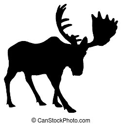 Adult moose - Beautiful silhouette of an adult moose with...