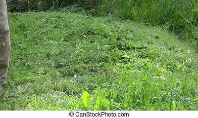 man trimmer cut grass - Closeup of meadow grass and gardener...